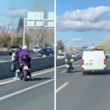 Os motoristas causaram um longo engarrafamento para salvar um cachorro na Espanha.
