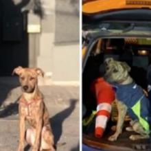 Policiais resgatam e adotam cão que encontraram abandonado