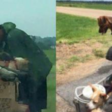 Sem-teto salva 10 cães e o que acontece depois muda sua vida