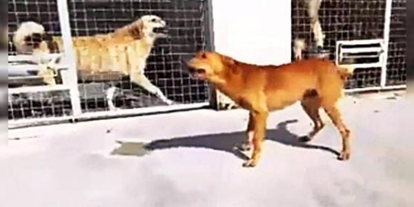 A reação do cachorro que foi adotado após 9 anos esperando em um abrigo impressiona