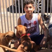 Aos 17 Anos Jovem Tem seu Próprio Abrigo e Já Resgatou 22 Cães e 4 Gatos