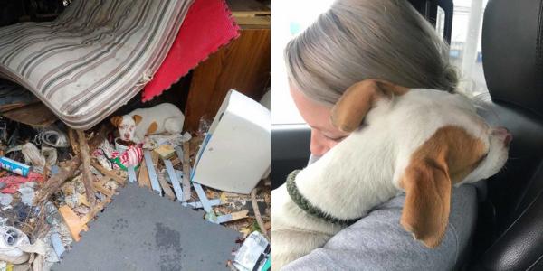 Cachorro dá a mulher o abraço mais doce quando percebe que está sendo resgatado