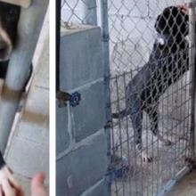 Cachorro de Abrigo dá a Pata para Pessoas que Passam na Sua Frente
