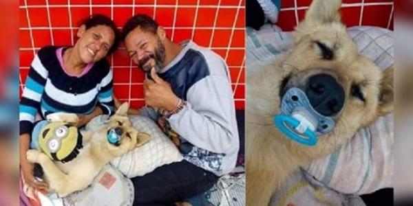 Cachorro de moradores de rua viraliza na internet ao dormir com chupeta
