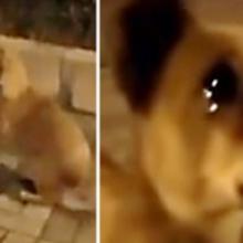 Cachorro de Rua Chora Quando Mulher se Aproxima com uma Demonstração de Carinho