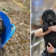 Cachorro Encontrado Abandonado em um Balde é Agora um Cão Farejador da Polícia