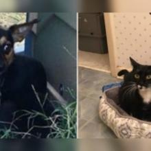 Cachorro Ficou Vigiando e Cuidando de Gatinha até Serem Resgatados Juntos