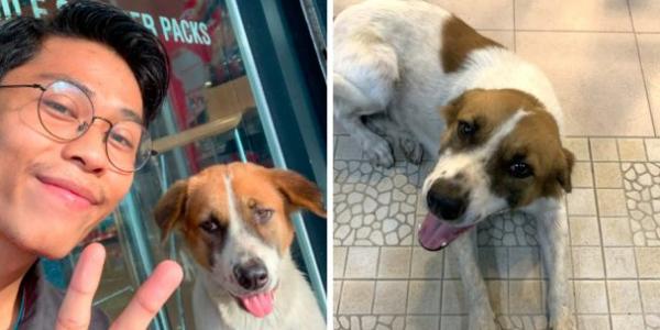 Cachorro Perdido Rastreia Homem que o Alimenta Diariamente e Acaba Sendo Adotado