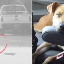 Cachorro que Seguia Sempre o Carro da Polícia é Adotado e se Torna Cão de Terapia para Crianças