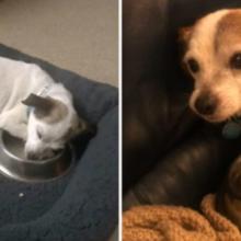 Cãozinho Resgatado não Consegue Acreditar que Finalmente Está Seguro e Dorme com sua Tigela Todas as Noites