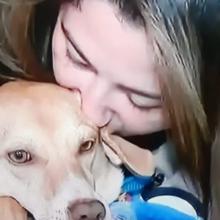 Depois de 6 Dias, Mulher Consegue Reencontrar seu Cão Perdido em Acidente de Carro