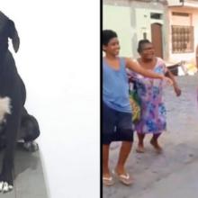 Ela Encontrou seu Cachorro Perdido Graças ao Poder das Redes Sociais
