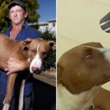 Ele caminhou por 2 dias com seu cachorro nos ombros implorando para chegar a tempo de salvar sua vida
