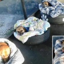 Estação Rodoviária Transforma Pneus em Camas Quentes para Receber Cães de Rua