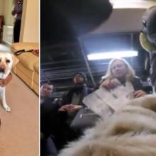 Homem Cego Coloca uma Câmera GoPro em seu Cão-guia e Eles Ficam Chocados com o Resultado