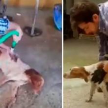 Lhe Pediram para Sacrificar seu Cão que era Tetraplégico, Mas ele Tinha Outros Planos