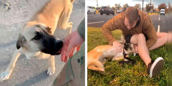 Militar encontra um cachorro abandonado e meses depois procura por ele para adotá-lo
