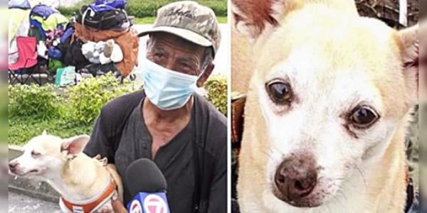 Morador de rua reencontra sua cadelinha, que havia sido roubada, e chora de alegria!