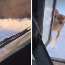 Motorista Faz Parada Não Autorizada Todos os Dias Para Alimentar Cachorro Faminto