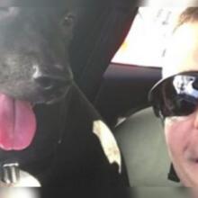 Policial Encontra Cão Amarrado na Chuva Fria, o Resgata e se Tornam Melhores Amigos