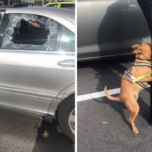 Policial quebra janela para salvar cachorro preso em um carro quente, e os proprietários ficam zangados com ele por danificar o carro