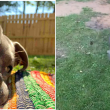 A Felicidade Dessa Cadela Resgatada ao Ter Seu Próprio Quintal Encantou a Todos