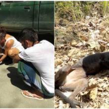 Cachorro perdido cai no chão e começa a chorar ao perceber que finalmente conseguiu ajuda