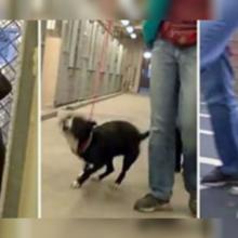 Cão é Adotado e Fica Muito Emocionado Ao Sair Do Abrigo Depois De Tanto Tempo