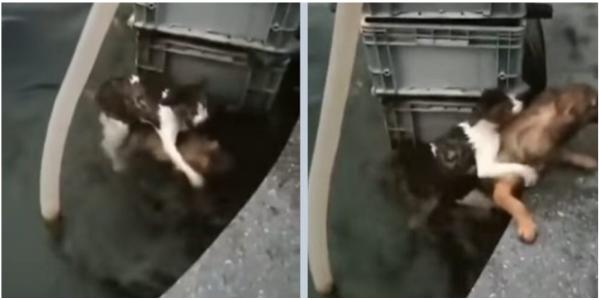 Cão mostrou muita coragem e pulou na água para salvar um gato que estava se afogando