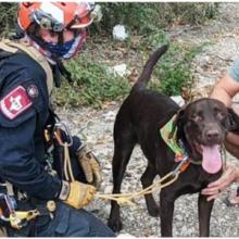 Cão sai quase ileso após uma queda de 21 metros de um penhasco