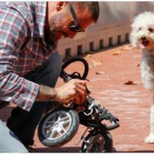 Cão se equilibra com suas patas traseiras esperando seu dono consertar seu carrinho