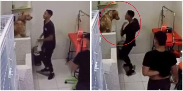 Eles registram o funcionário de um petshop e os donos dos cachorros ficam perplexos