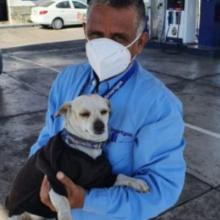 Funcionários de posto de gasolina presenciam cachorro ser atropelado e intervêm imediatamente