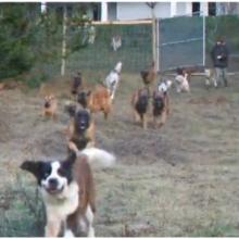 Homem adota 45 cães e constrói santuário para eles viverem livres e felizes