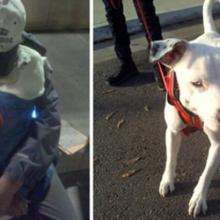 Homem com o coração partido pede um último desejo para seu amado cachorro antes de partir