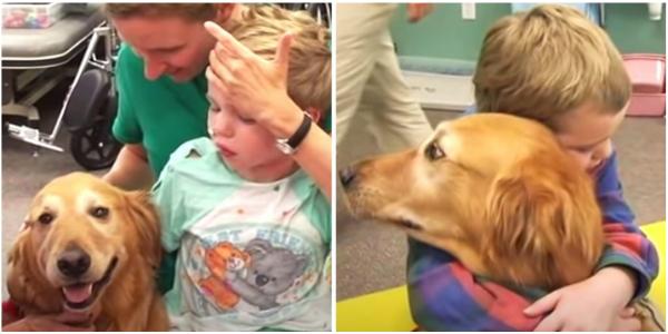 Menino Sobrevive e se Recupera Milagrosamente Graças a um Cachorro que Permaneceu Fielmente ao seu Lado