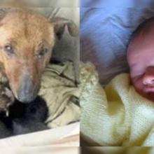 Moradora Encontra Cãozinho Aquecendo Bebê Abandonado Em Sua Ninhada