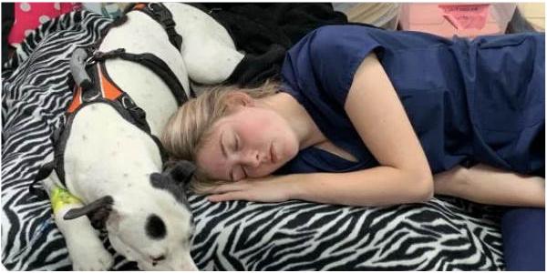 Técnica veterinária dorme com pitbull com câncer para confortá-lo