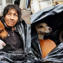Usando sacos plásticos, mulher cria barraca para proteger a si e seus cães do inverno