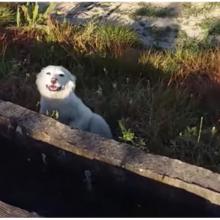 Cachorrinho abandonado enlouqueceu de alegria quando descobriu que seria resgatado. Ele sorriu e abanou o rabo