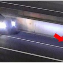 Câmeras de trânsito registram mulher parando seu carro arriscando sua vida para salvar um cachorro
