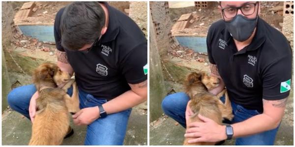 Cãozinho acorrentado e desnutrido não para de agradecer ao homem que o resgatou