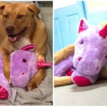 Cãozinho de rua que sempre tentava roubar pelúcia é resgatado e ganha de presente o ursinho que queria