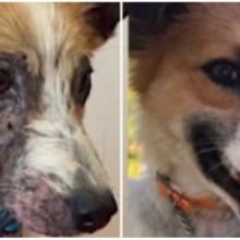 Cãozinho que era negligenciado por todos, é resgatado e transformado pelo amor de seus novos donos