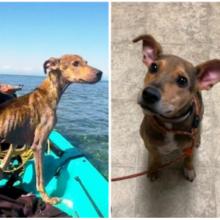 Fotógrafo Resgata cão que foi abandonado em uma ilha remota e decide adotá-lo.