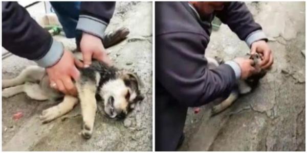 Homem encontrou cãozinho sem respirar e quase sem vida e precisou agir rapidamente para salvá-lo.