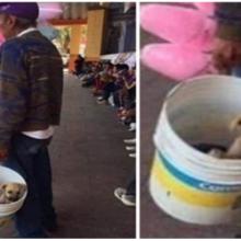 Idoso carrega cãozinho consigo todos os dias depois de ter lhe resgatado das ruas.