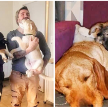 O cachorro cego resgatado não estava tão feliz, até que também adotaram seu irmão e tudo mudou.