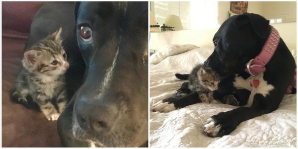 O gatinho órfão encontrado na calçada não iria a lugar nenhum sem sua nova mãe