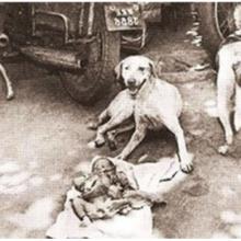 A história dos 3 cães de rua encontrados protegendo um bebê indefeso deixado no lixo
